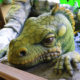 главндинозавр